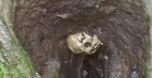 skull-sinkhole