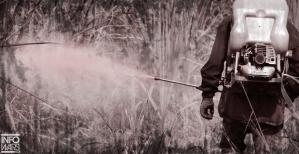 gmo-field-pesticide
