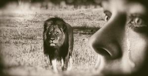 lions-humans