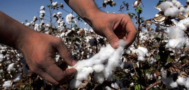 cotton-crop-farmer-735-350-2