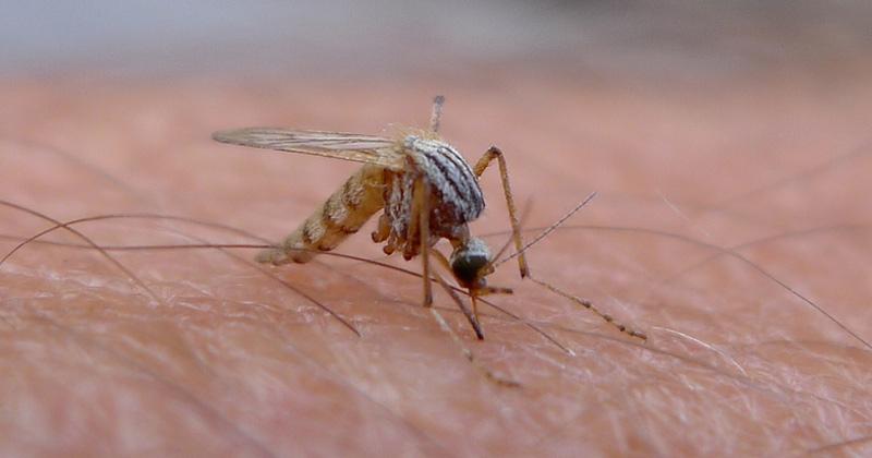 mosquito-skin1